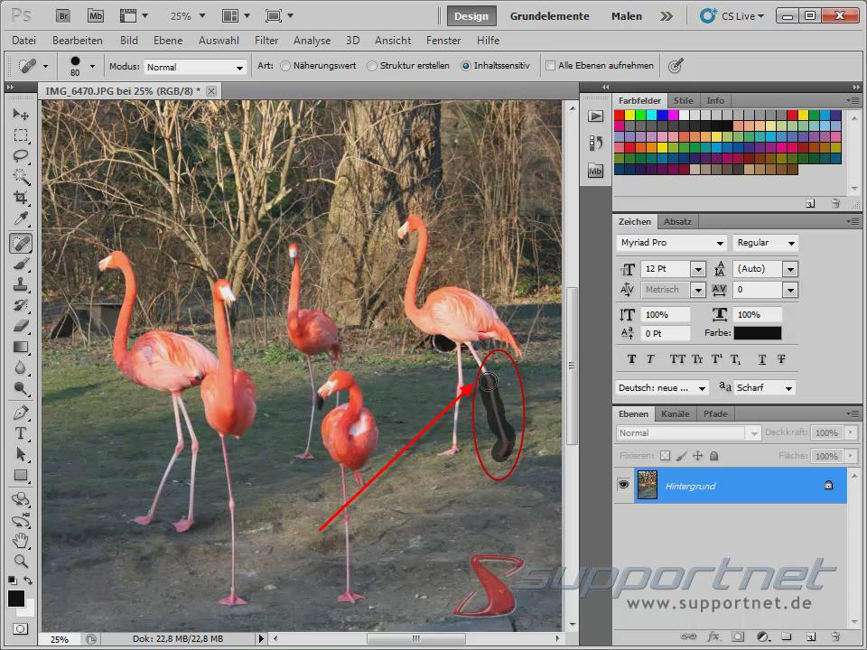 05-Adobe-Photoshop-CS5--Content-Aware-Inhaltssensitiv-Flamingo-Berichsreparatur-Pinsel-Werkzeug-Inhaltssensitiv-Bein-uebermalen_470.png