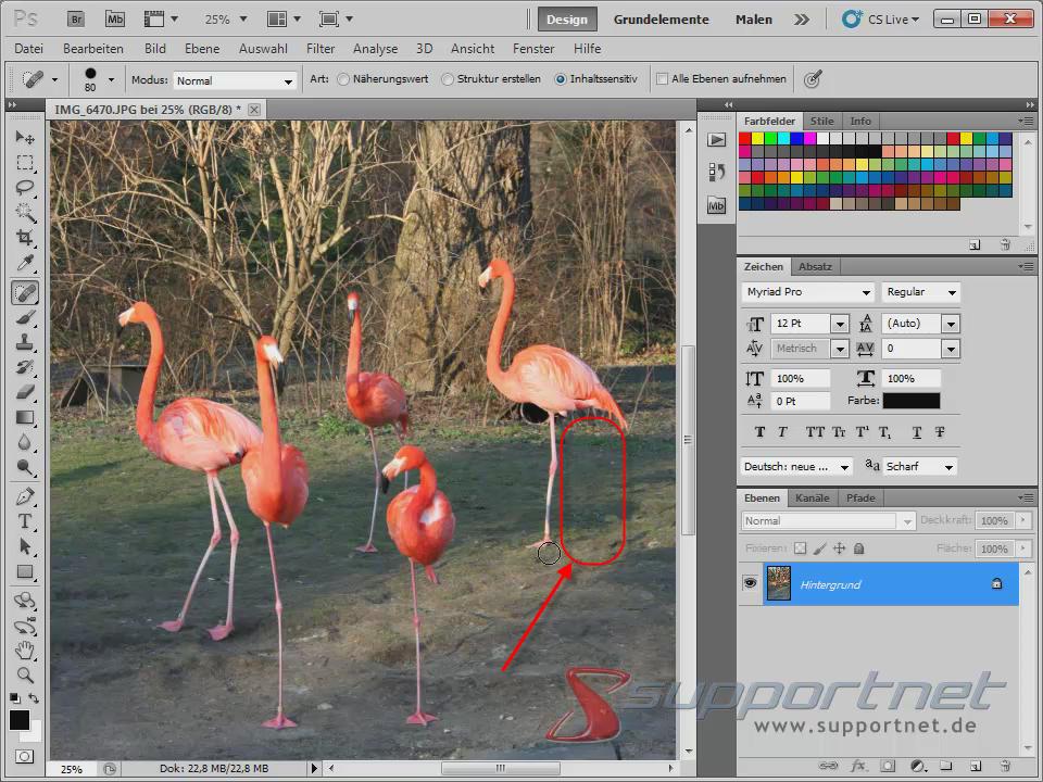 06-Adobe-Photoshop-CS5--Content-Aware-Inhaltssensitiv-Flamingo-Berichsreparatur-Pinsel-Werkzeug-Inhaltssensitiv-Bein-weg_470.png