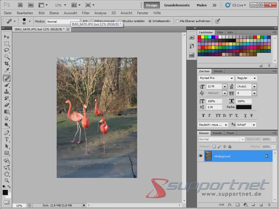 10-Adobe-Photoshop-CS5--Content-Aware-Inhaltssensitiv-Flamingo-Berichsreparatur-Pinsel-Werkzeug-Inhaltssensitiv-fertig-Ergebnis_470.png